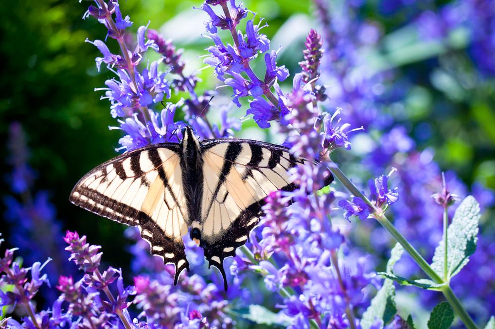 butterfly1100.jpg