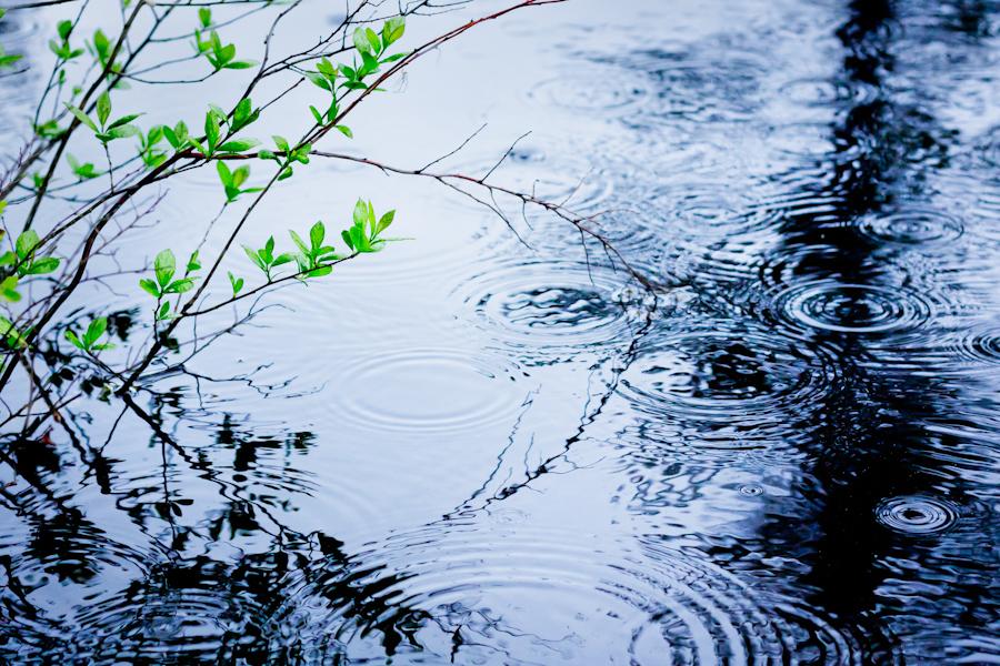 rain+on+pond.jpg