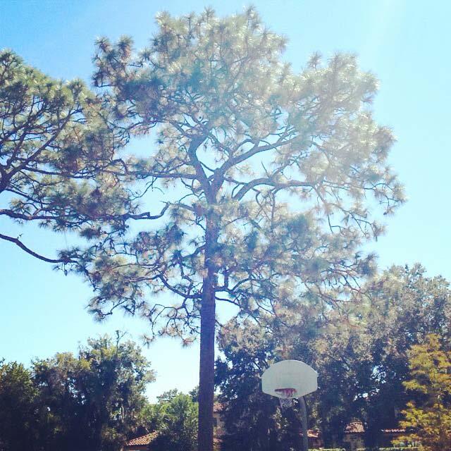 Phelps Park, Winter Park, FL