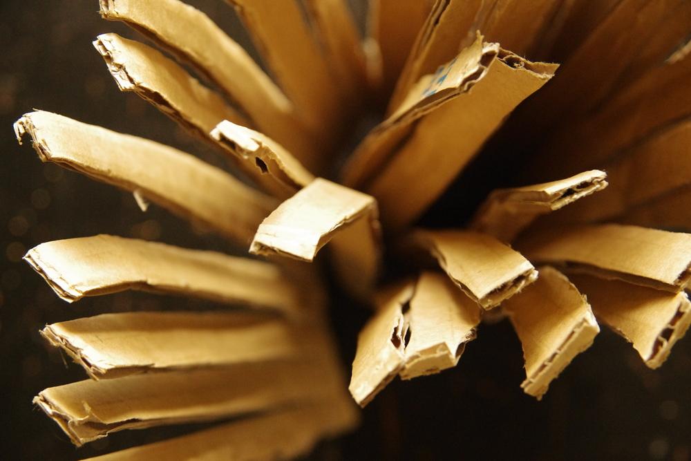 blooming cardboard