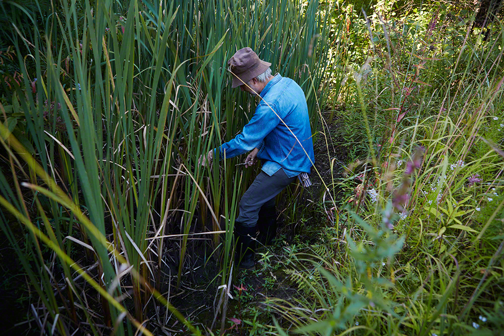 Gathering reeds for an arrangement