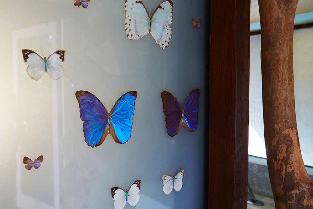 """And here is the entrance to Annie's bath itself with a collection of butterflies which I brought back from Taiwan and Brazil."""
