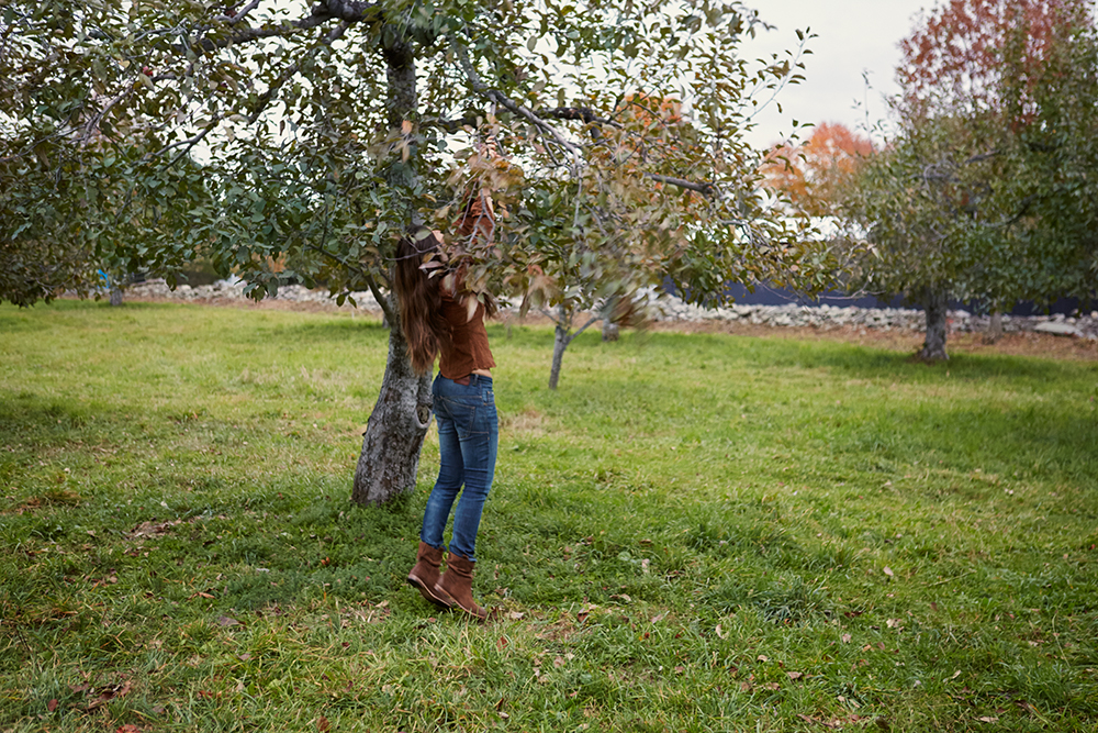 Ferrara reaching for the last apple of the season.