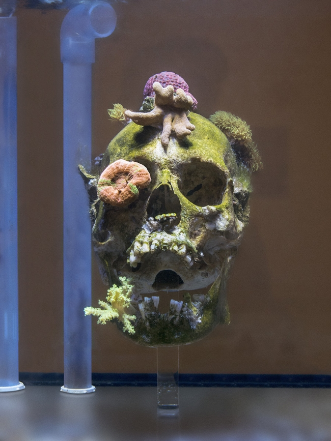 Nowhere to Be Found, 2011. Human skull suspended in a clear aquarium tank. Living corals cover the skull over time, resulting in a reef. As shown at Marianne Boesky gallery