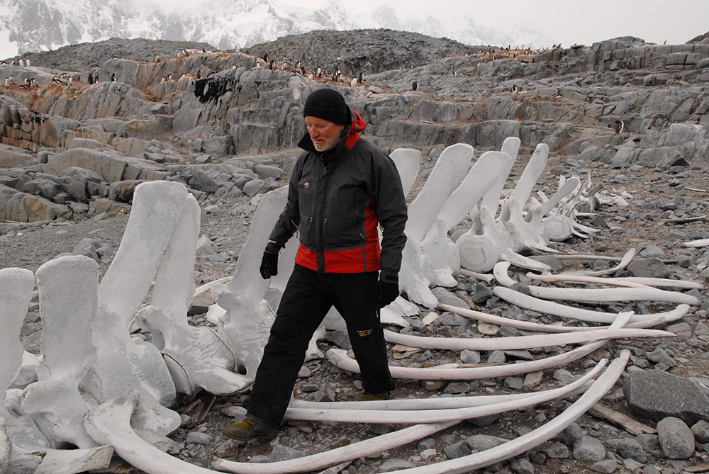 Pt Lockroy, Antarctica Peninsula, 2008. Known as 'Heinz 57,' this whale skeleton was first assembled by Jacques Cousteau's crew and 'perfected' over the years. Photo courtesy of Jon Bowermaster.