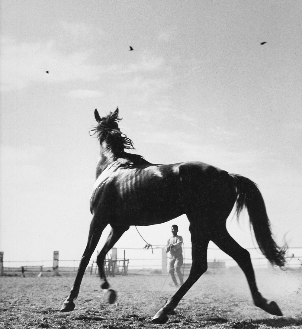 Horse, Karachi, Pakistan, 1955. Photo by Dmitri  Kasterine