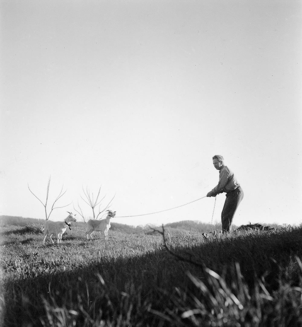 Calder with goats, c.1938.