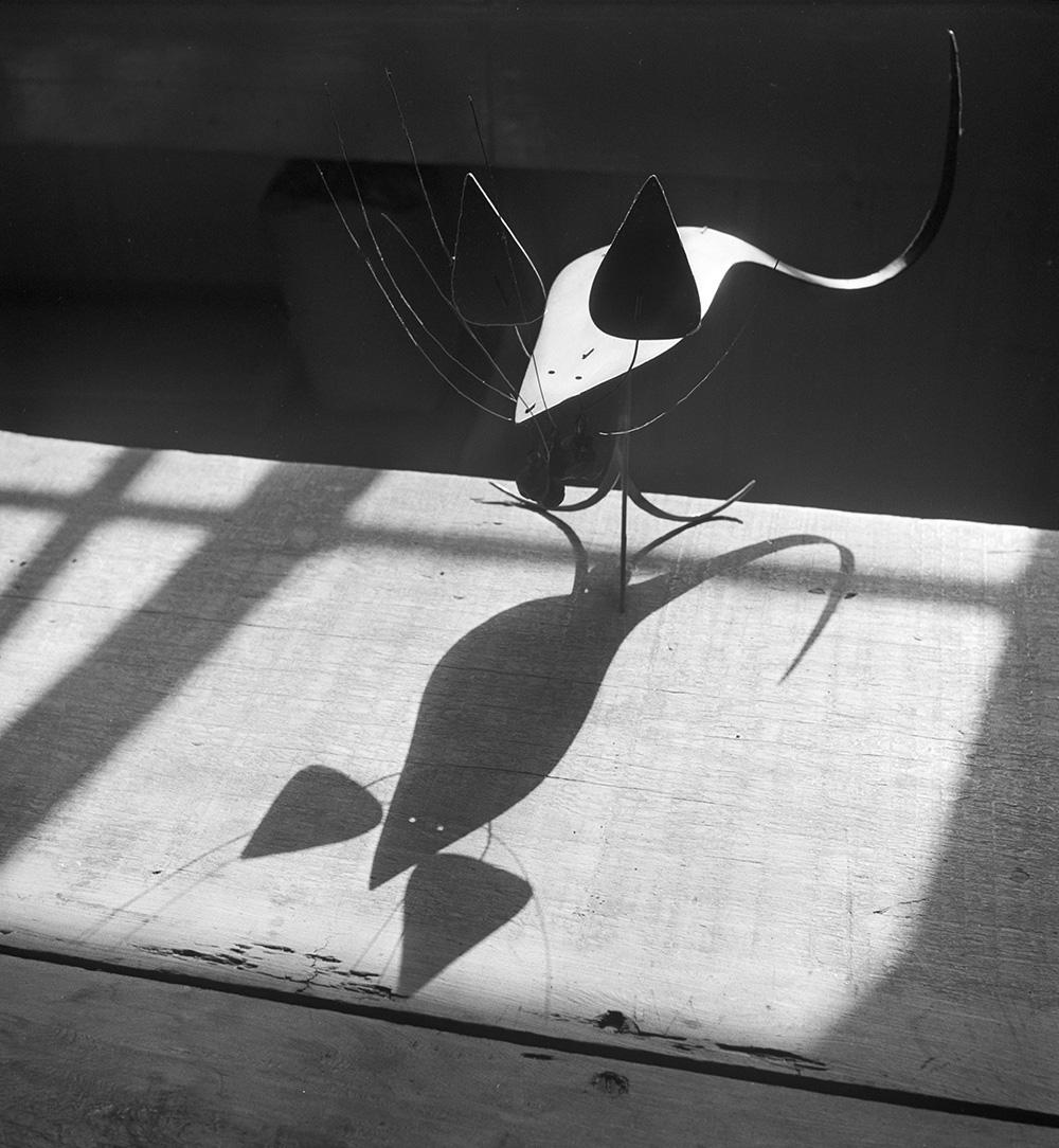 "Rat,  (c.1948), Roxbury house""big room"", 1950."
