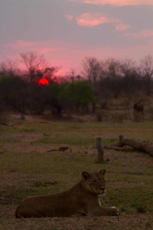 LAKE KARIBA MATUSADONA NATIONAL PARK ZIMBABWE AFRICA: Nabula with sunset.  (Photo Credit: MATTHEW HOOD/ DON PERCIVAL/ Goddunnit Promotions)