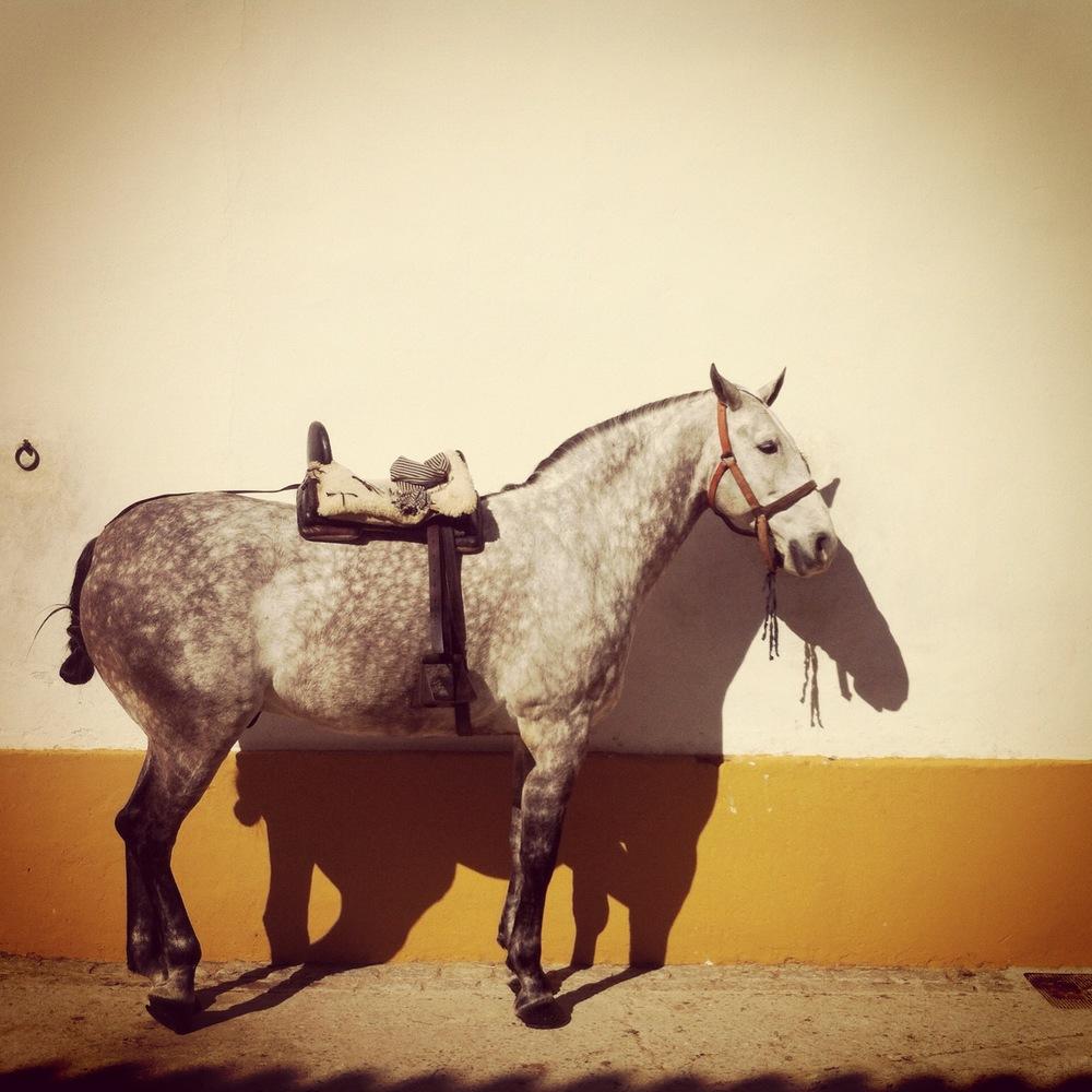Equestre_cheval.JPG