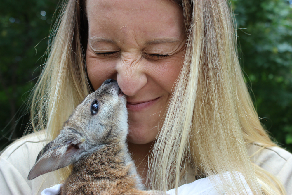 LINCOLN, NB.: Liv the wallaby gives kisses to her unlikey best friend, zookeeper Taylor Daniels. Liv fell out of her biological mother's pouch, and had to be hand-raised by Taylor and her fellow zookeepers. Taylor kept Liv alive with bottle feedings and nurturing, and Liv recognizes Taylor not only as her surrogate mother, but as her best friend.  (Photo credit: © National Geographic Channel / Jörg Fockele)