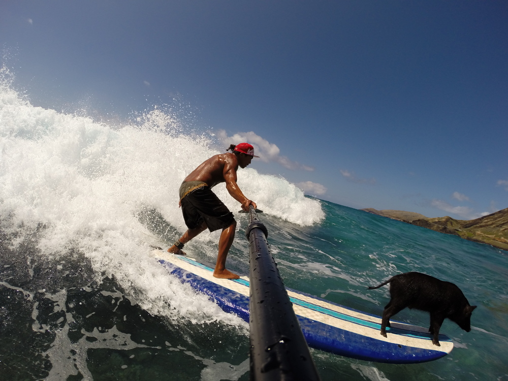 OAHU, Hawaii - Kai Holt surfs with his unlikely friend, a pet pig named Kama. This inseparable duo shares a bed, eats fruits from the same tree, and even surfs together! (National Geographic Channels/Kai Holt)