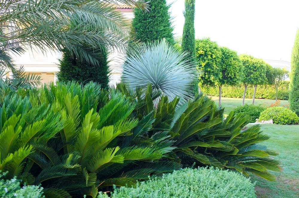 Rubi landscape design brisbane landscape design for Residential landscape design brisbane