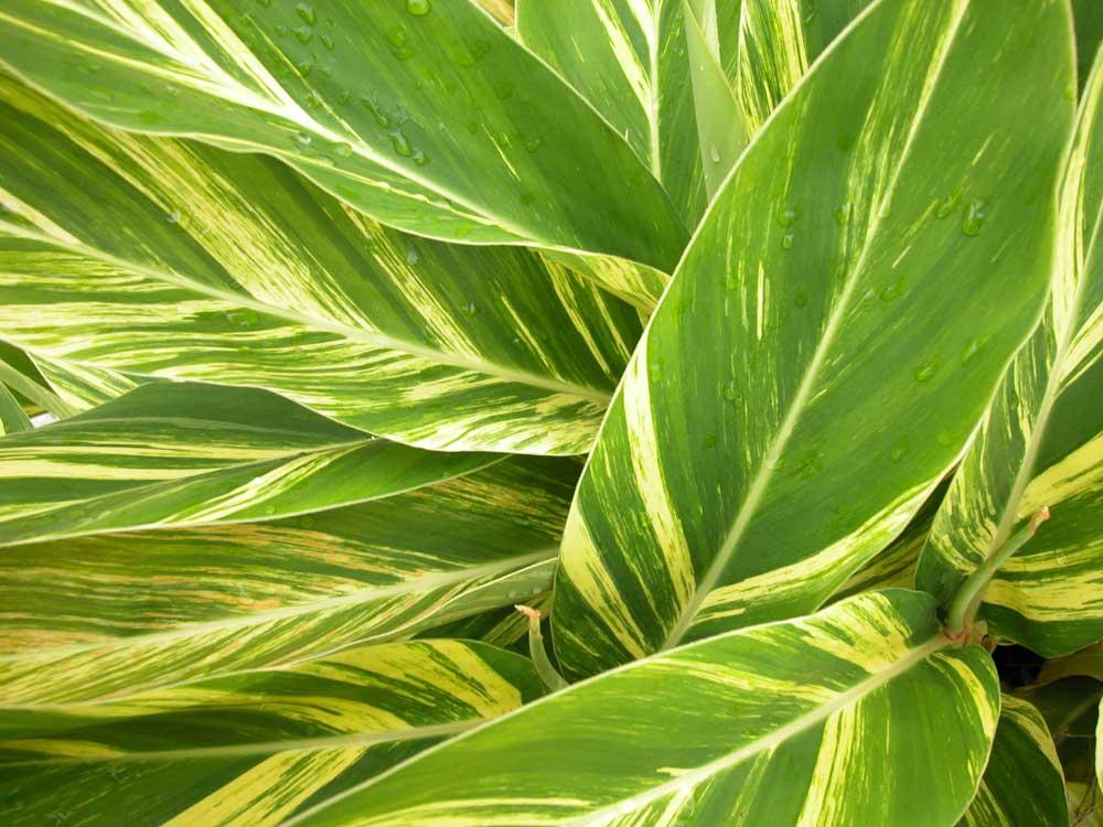 RUBI-Landscape-Design-Shell-Ginger.jpg