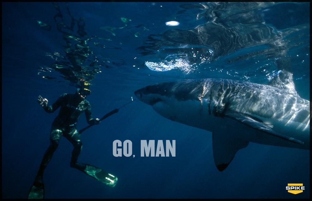 GO-MAN_SHARK.jpg