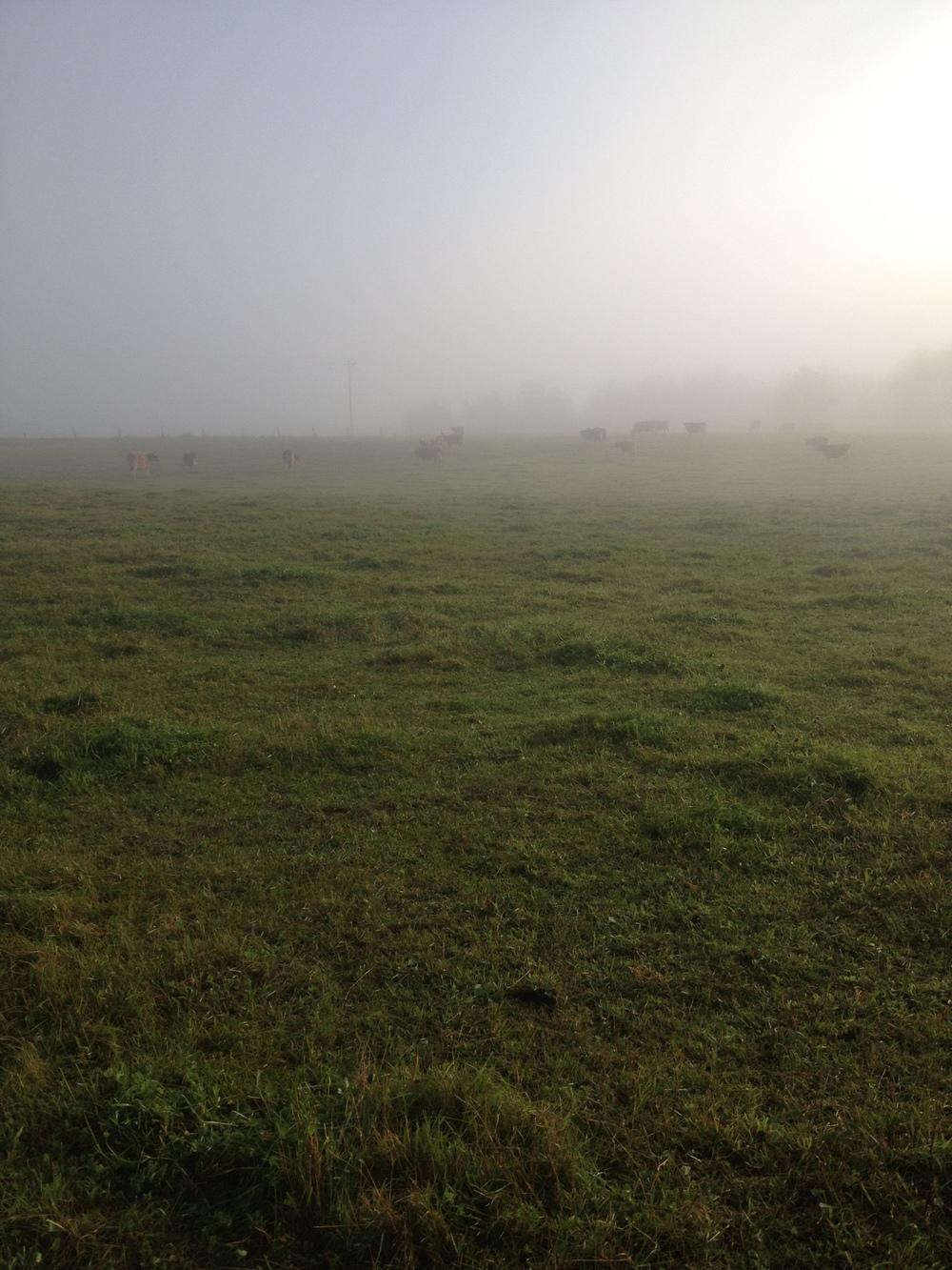 Hazy fall morning