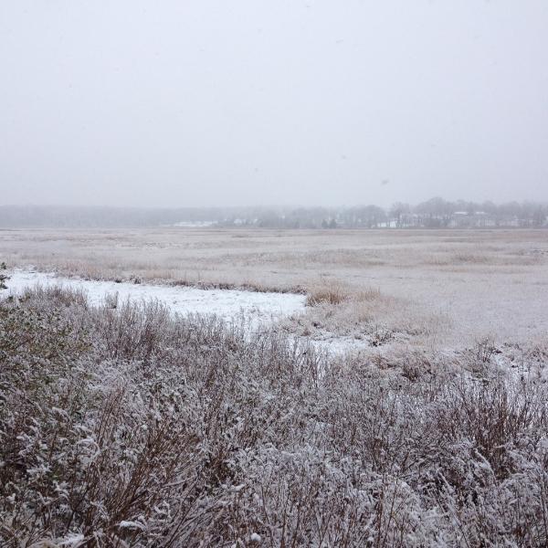 crab meadow marsh winter.jpg
