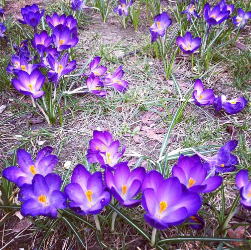 spring14.web.jpg