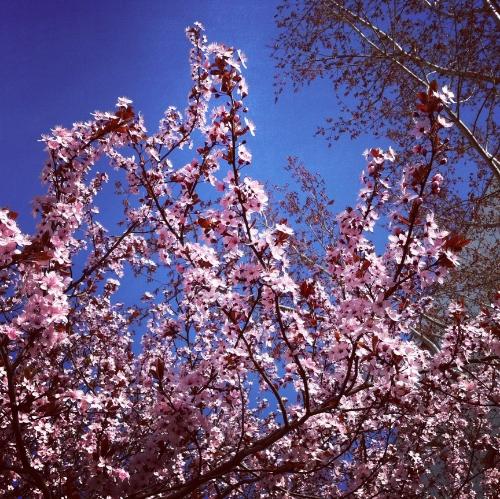 spring.stephanielevy