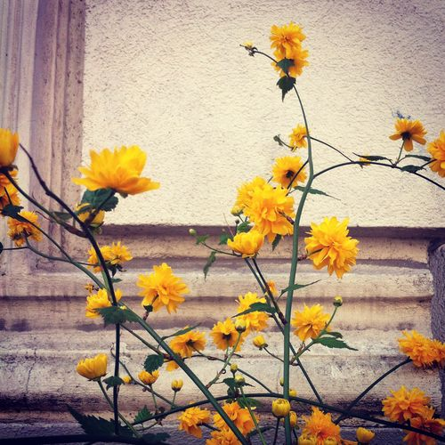 yellow.berlin.stephanielevy