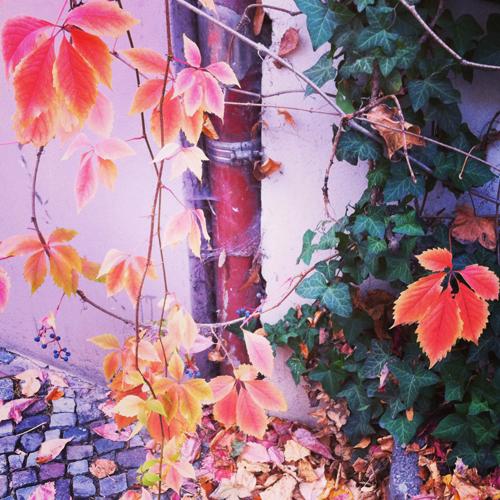 creative.autumn.stephanie.levy