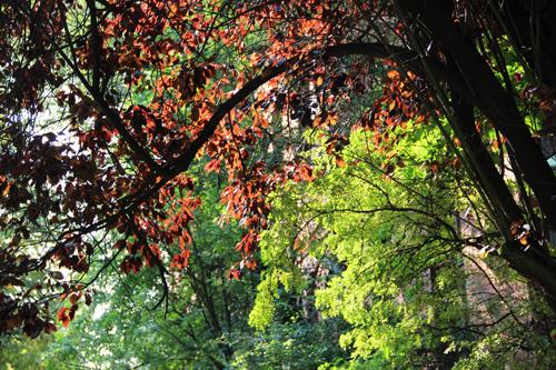 autumn.stephanie.levy