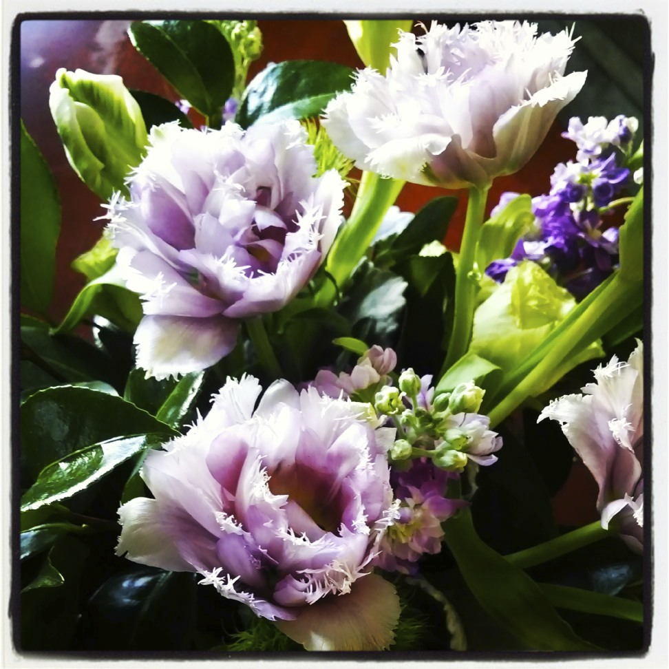 An Instagram photo I took of the purple double fringed Tulips several days after the show.