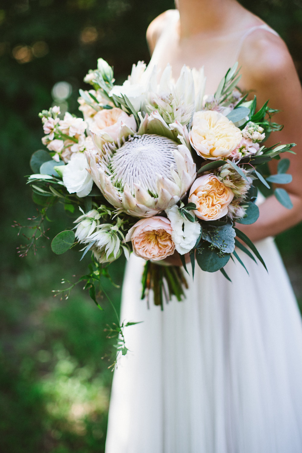 King and Blushing Bride Proteas, Juliet Garden Roses, Lisianthus, Stock, Jasmine Vine.  Photo by Jennifer Crook Photography.