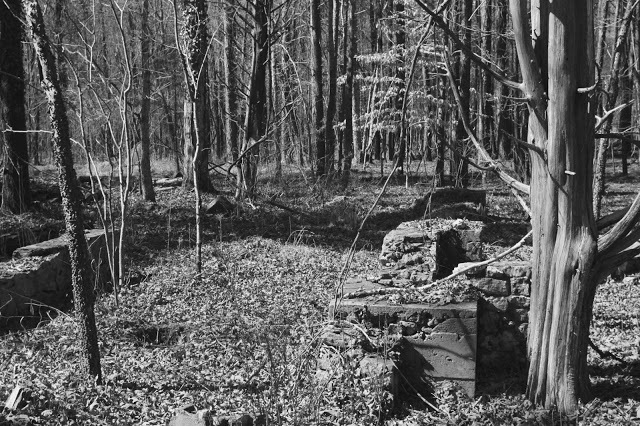 forest1+3.jpg