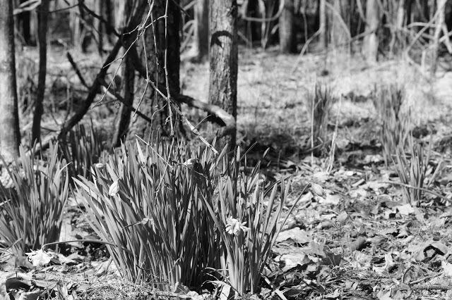 forest1+8.jpg
