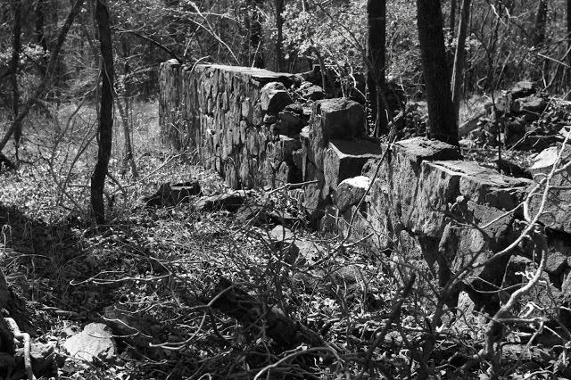 forest1+4.jpg