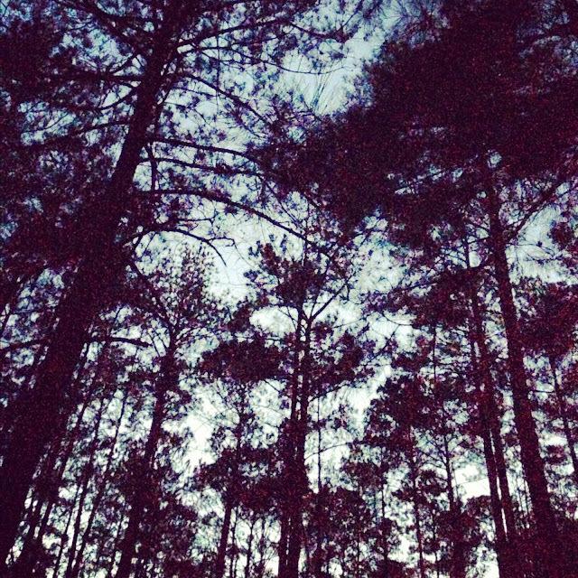 pine forest near my childhood home in Sharpsburg, Georgia