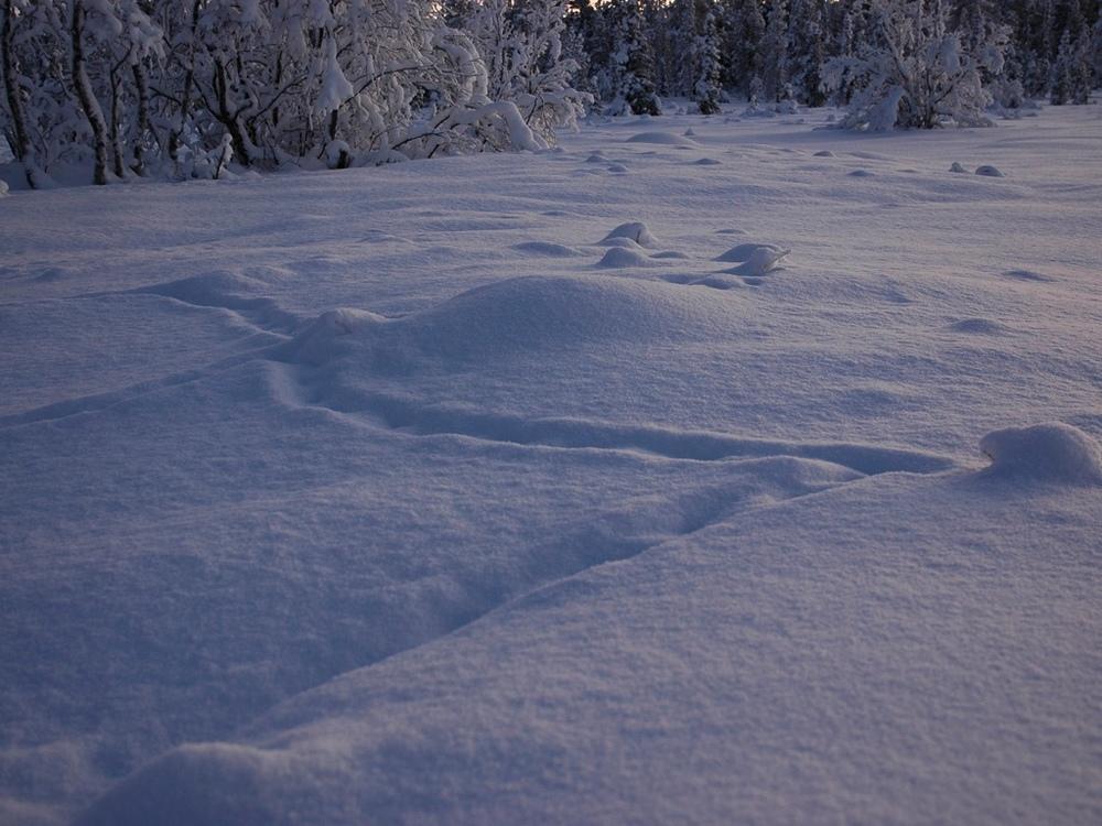 Kiruna, Sweden. 2009.