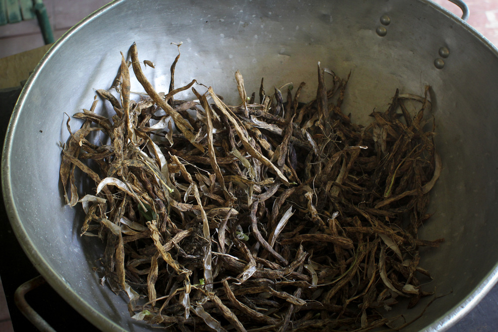 Pot of rattlesnake beans in their dried pods.