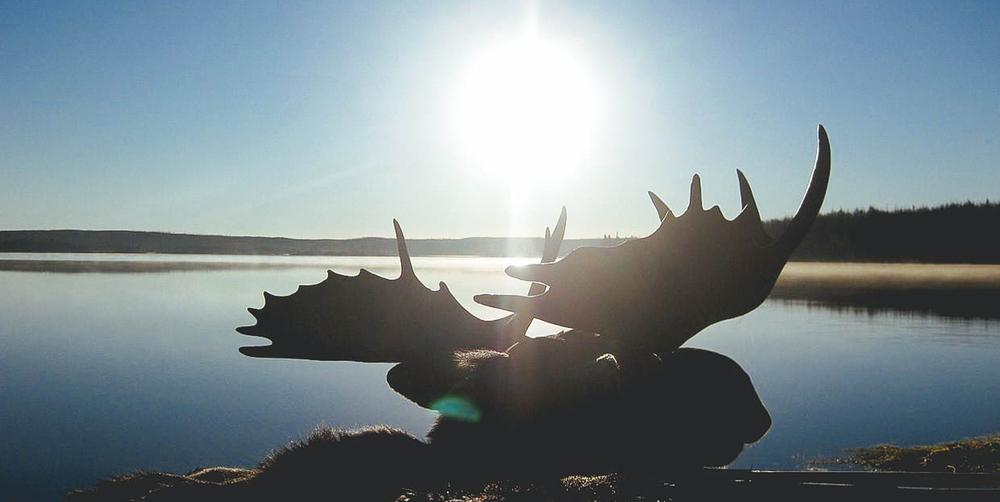 moose-cover.jpg