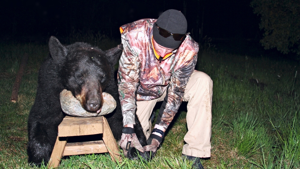 bear-cover.jpg