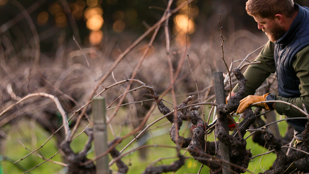 Winegrower Series  featuring T-Vine Winery