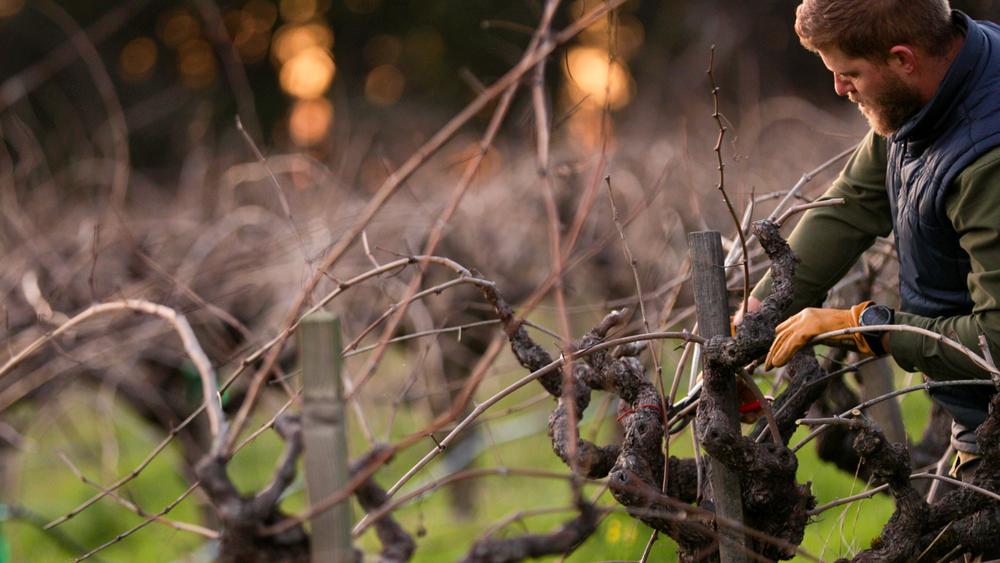 Winegrower Series  featuring Black Sears Vineyard with T-Vine Winery