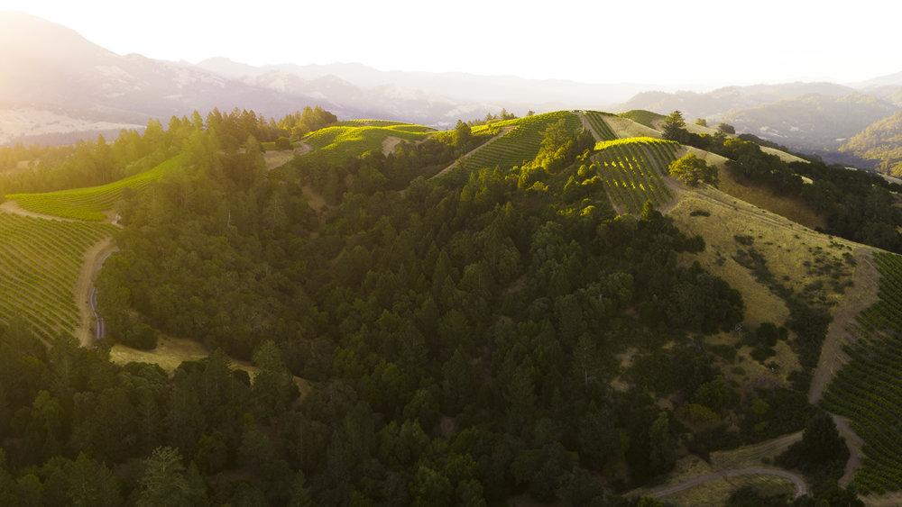California Certified Sustainable Winegrowing  featuring Ferrari-Carano Vineyards & Winery