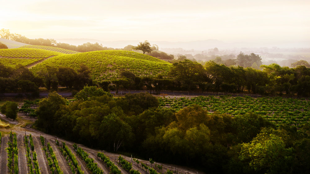 ritchie vineyard_72ppi_001.jpg