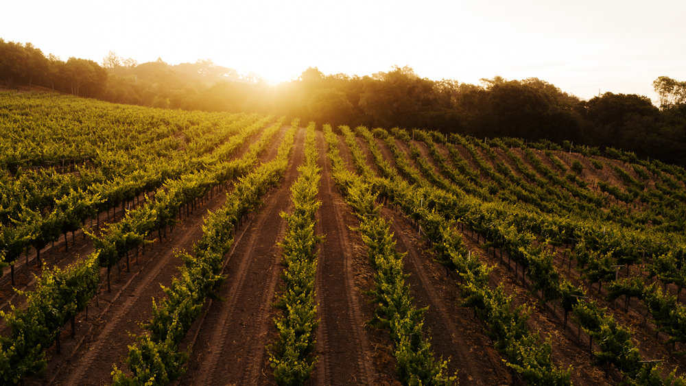 ritchie vineyard_72ppi_028.jpg