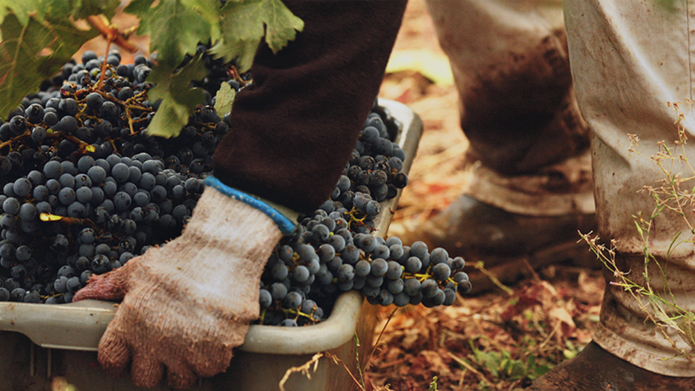 Our Why  featuring Andy Smith, Viticulturist, Winemaker & Partner at DuMOL Winery