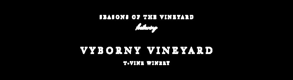h2_seasons of the vineyard vyborny vineyard with t-vine winery.png