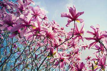 aprilflowersj.jpg