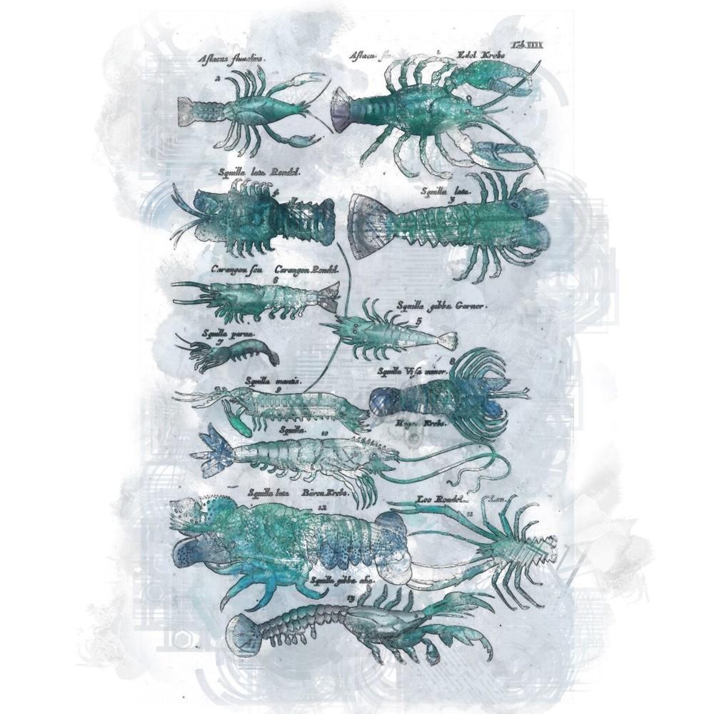 crustatians.jpg