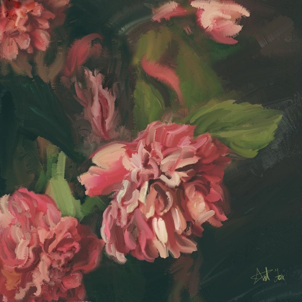 pink chrysanthemum.jpg