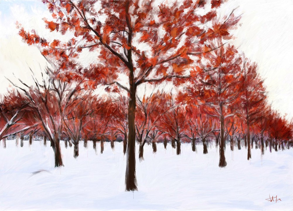 red+trees+in+snow+for+web.jpg