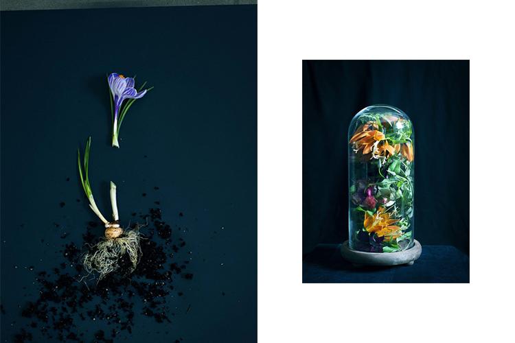 Tidal Magazine//Anna Wolf