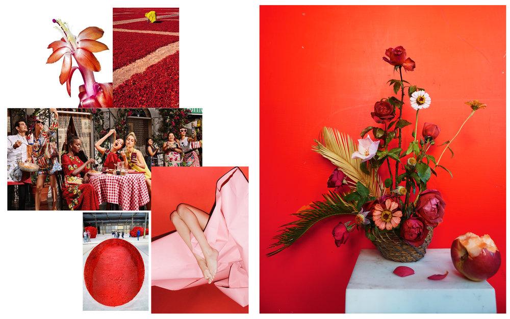 Flowers: Roses, Zinnia, Sago Palms  Images from: Wim Reyns •Sudip Roychoudhury • Dolce & Gabbana • Anish Kapoor • Eric White