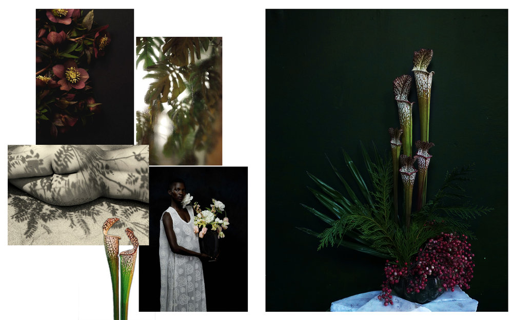 Flowers: Saracenia, Cyprus, Fan Palm, Pink Peppercorn Images from: Jennie Price • Johann Darcel • Kansuke Yamamoto • Justin Bridges